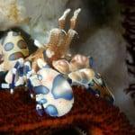 baliocean2.jpg