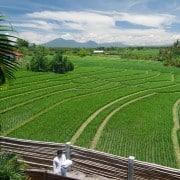 Villa Bali Villa Shalimar domaine- ref VDSH001 – 5