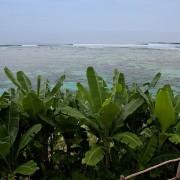 Villa Bali Bidadari estate- ref VIBI001 – 23